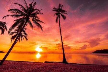 business-acumen-sunset